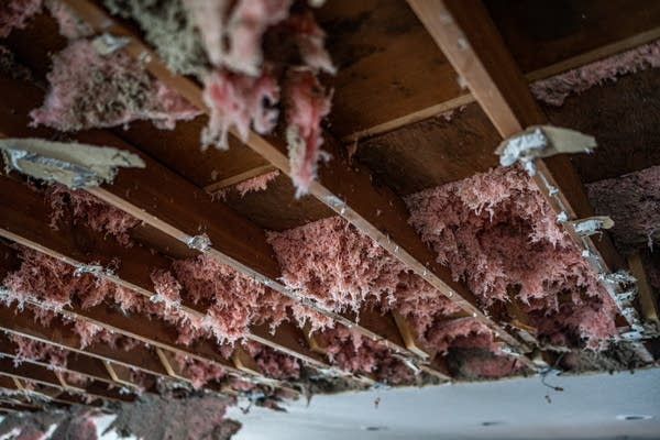 Pink insulation hangs from rafters.
