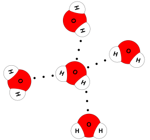 Water molecules: Dotted lines indicate hydrogen bonds