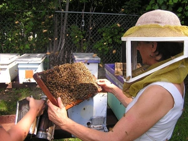 Marla Spivak and her bees