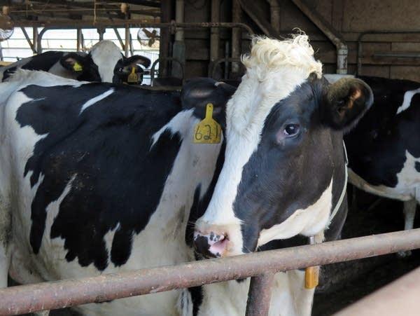 Dave Schwartz, who farms near Slayton, is just breaking even on milk.