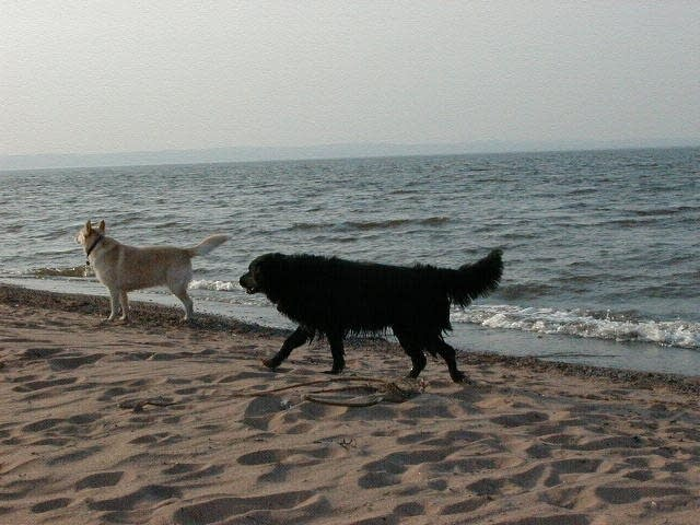 Dogs on a Lake Superior beach