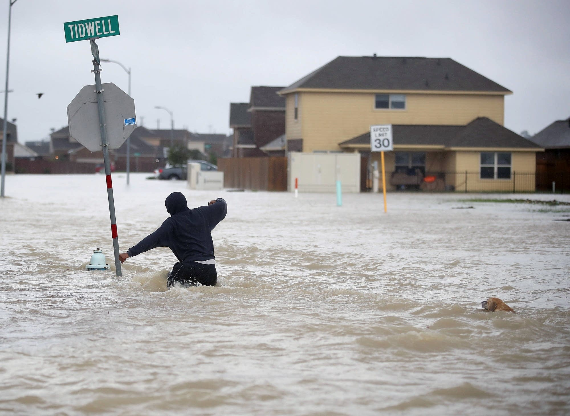 A person walks through a flooded street with a dog.