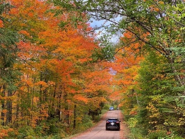 Fall colors in northern Minnesota.