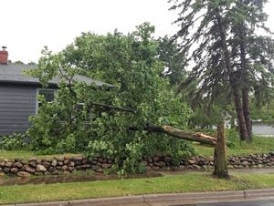 Tree down at E. 56th and S. 21st, Minneapolis