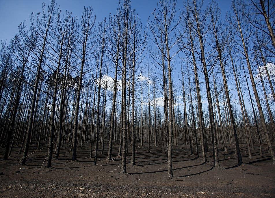 Burned wilderness