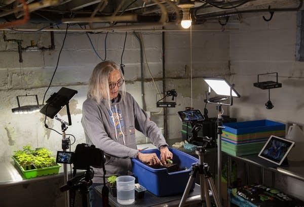 A camera on a tripod records video of a man transplanting a plant