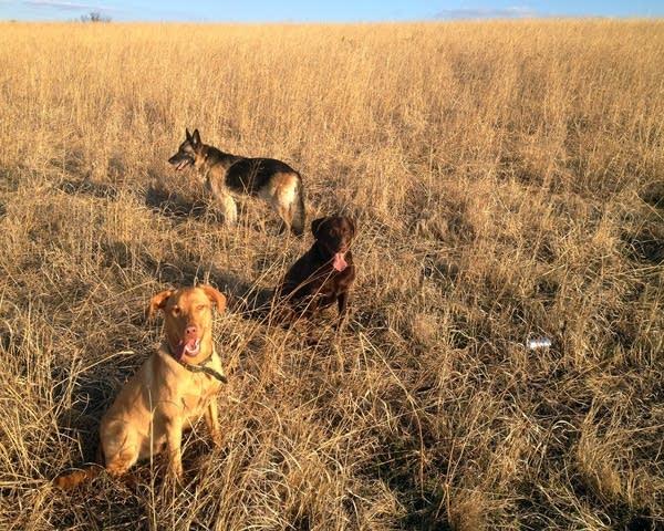 Dawn Stimmler and Jim Anderson's three dogs