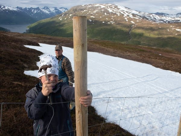 A father and son fix a wood and wire fence in front of snowcapped mountains