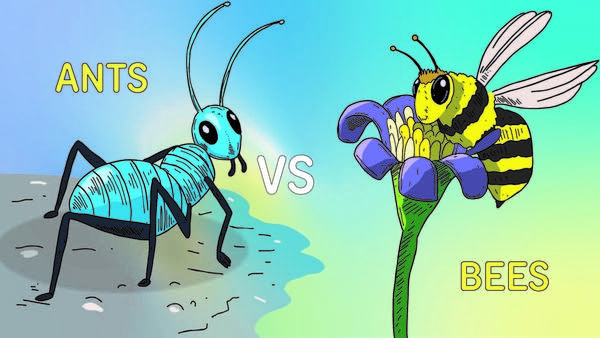 bee_vs_ant_text