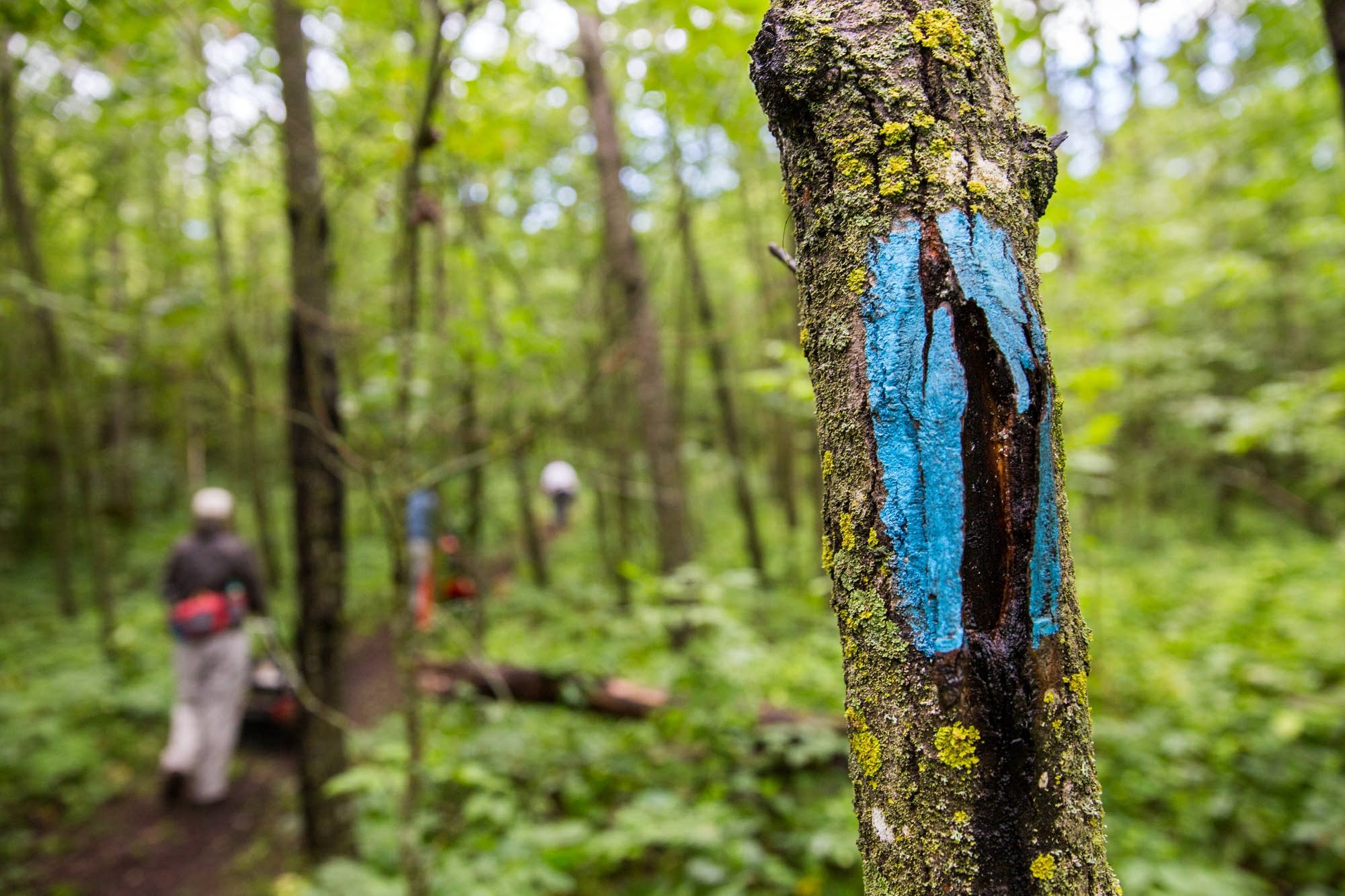 Blue paints marks the North Country Trail