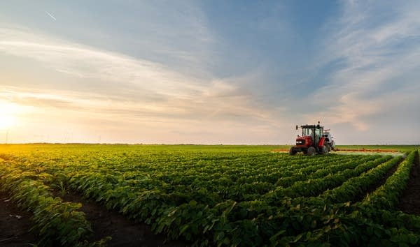 Tractor spraying field of soybeans