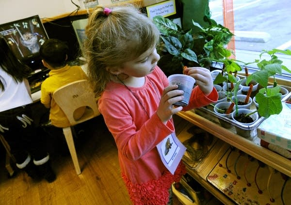 Checking bean plants