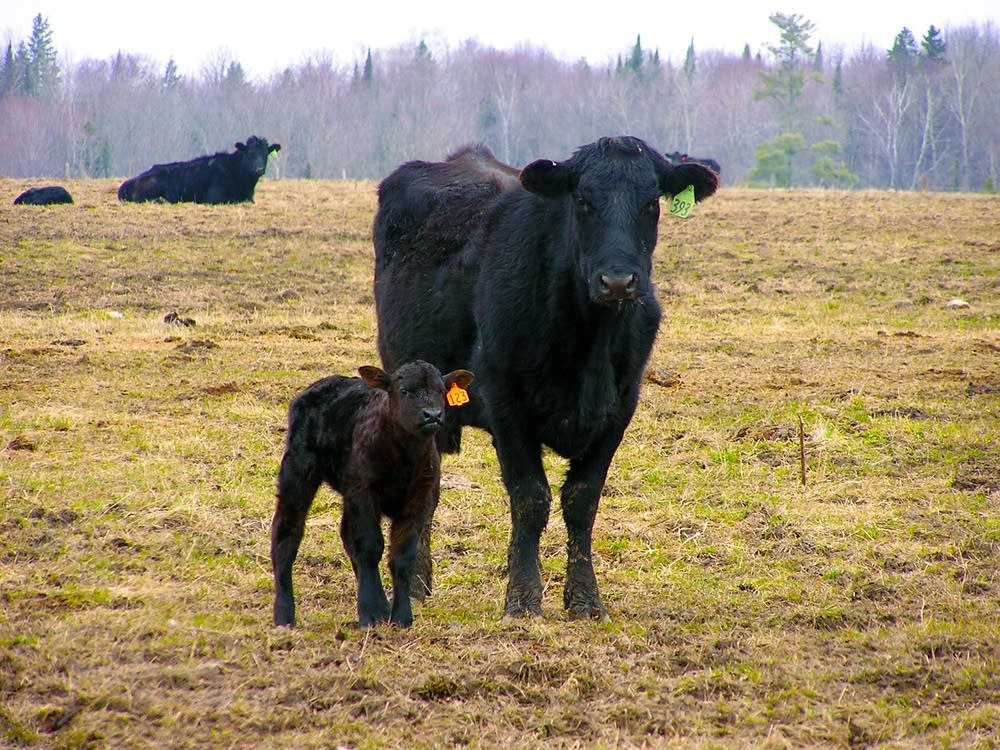 Protecting livestock