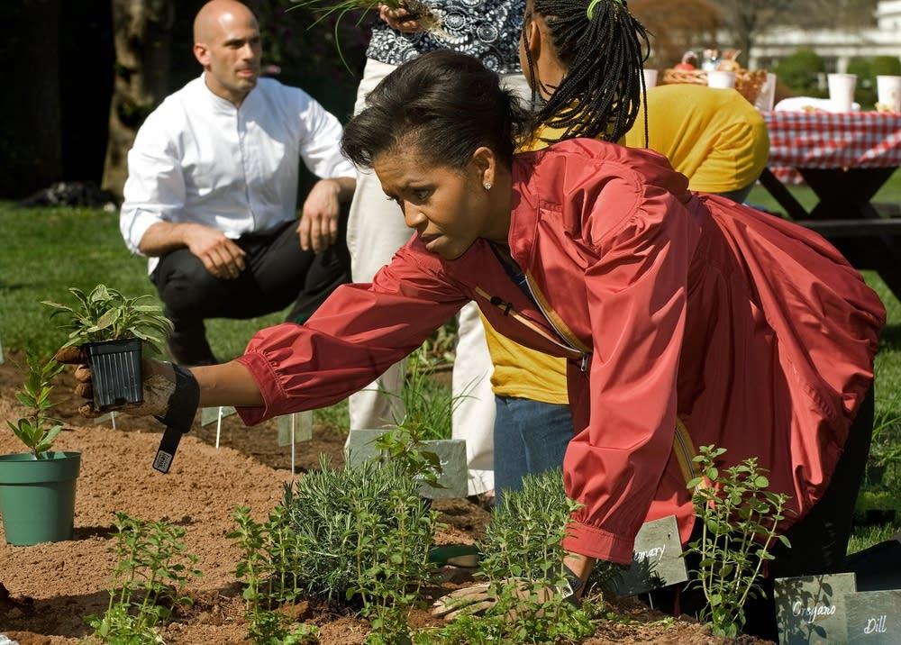 Michelle Obama gardens