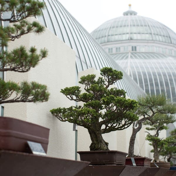 Como Zoo Conservatory Reaches Milestone In 10 Year Expansion Mpr News