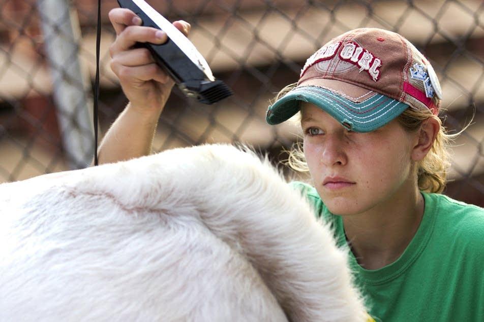 Cheyenne Black grooms her steer.