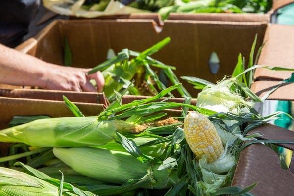 Corn sits in a box.