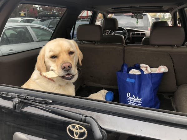 Rudy The PodDog goes for a ride.