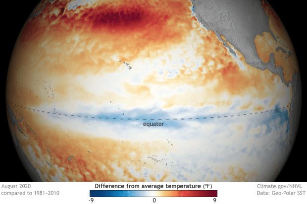 Pacific Ocean temperature departure in August 2020