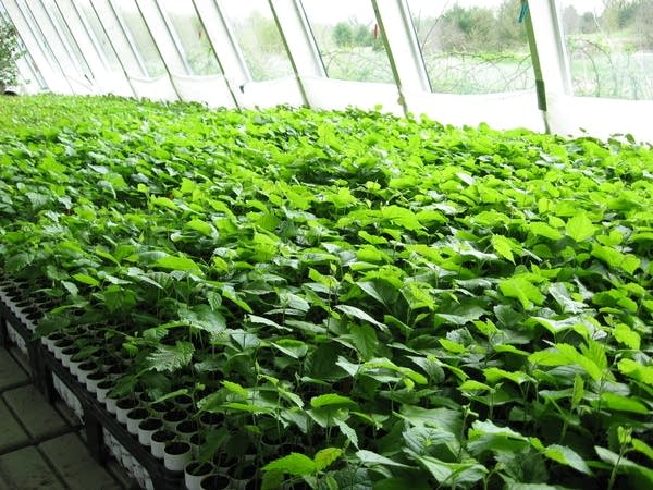 Philip Rutter's Greenhouse
