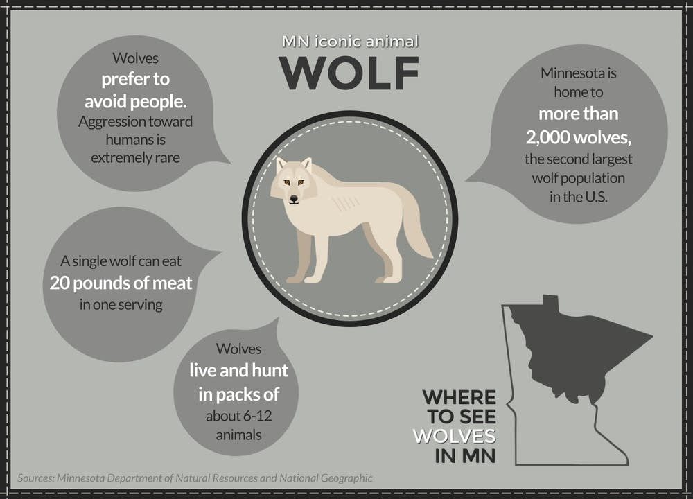 A field guide to Minnesota's iconic animals | MPR News