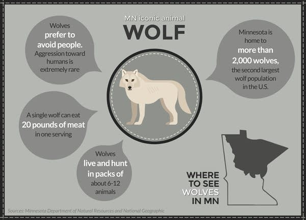 More than 2,000 wolves live in Minnesota.