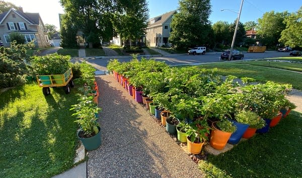 Plants in the ground and pots fill a front yard.