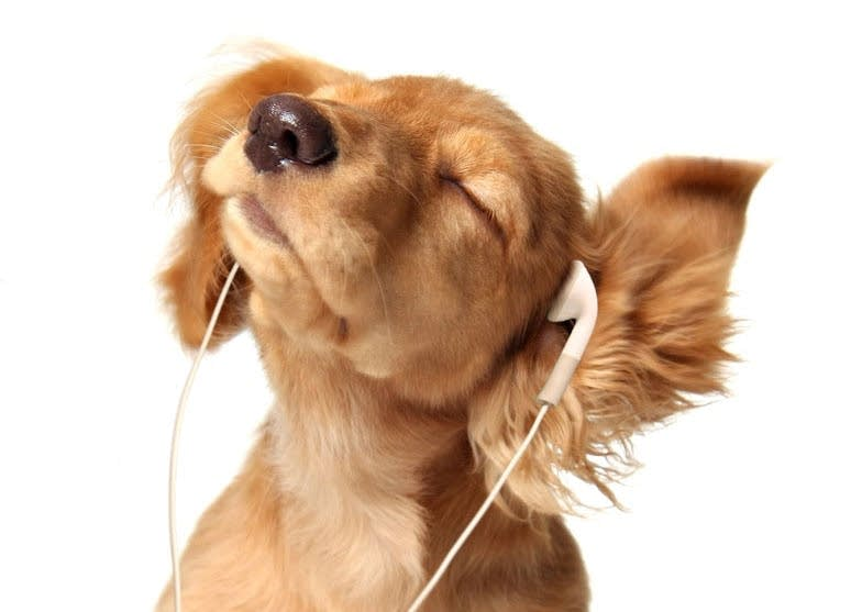 Pets and music