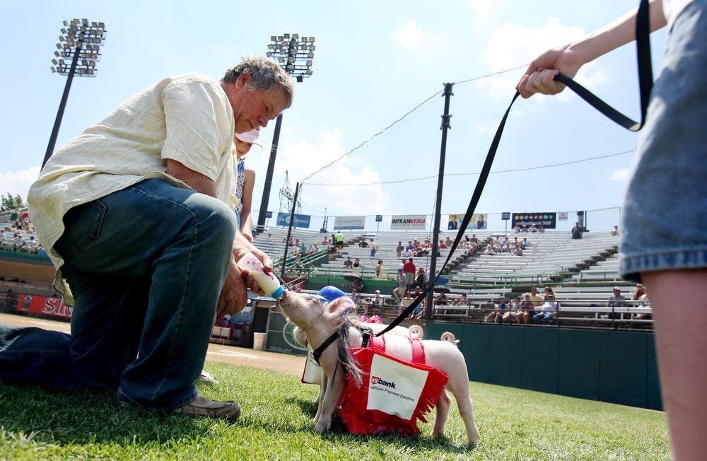 Dennis Hauth feeds the St. Paul Saints mascots