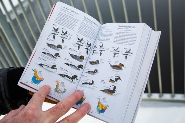 A hand holds a book identifying multiple birds.