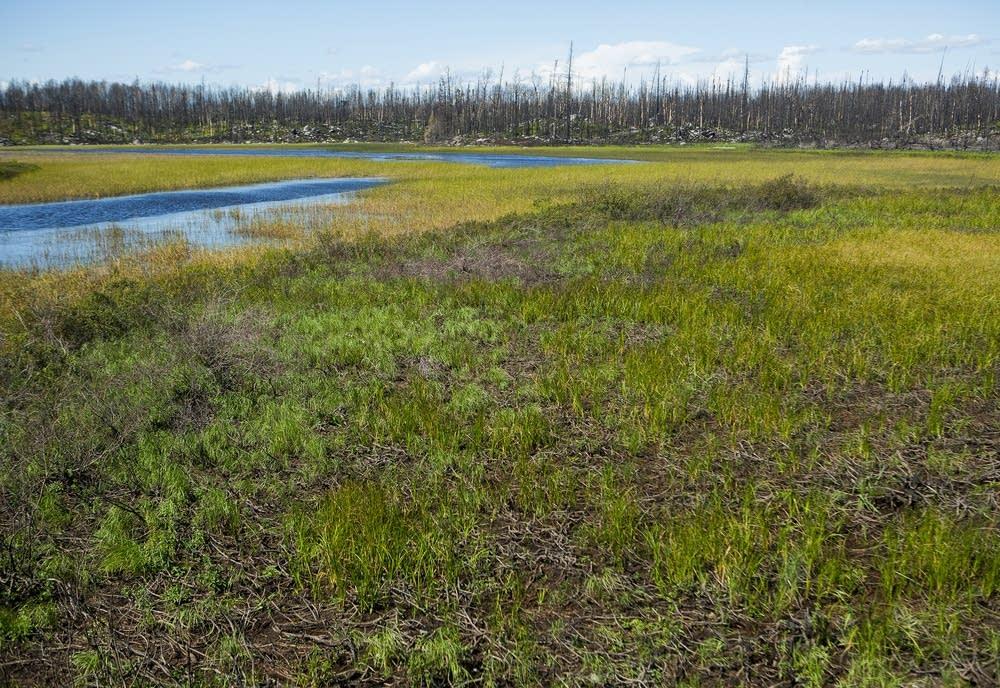 Returned vegetation