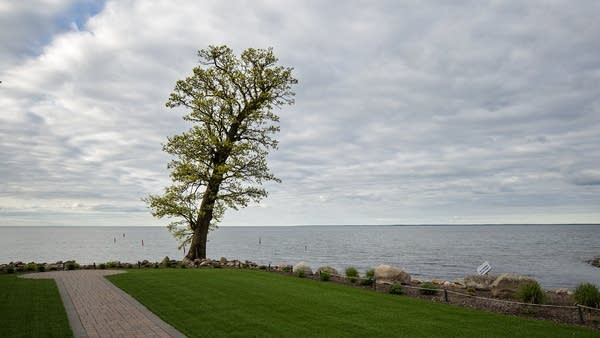 A lone tree leans over Lake Mille Lacs at Izaty's.