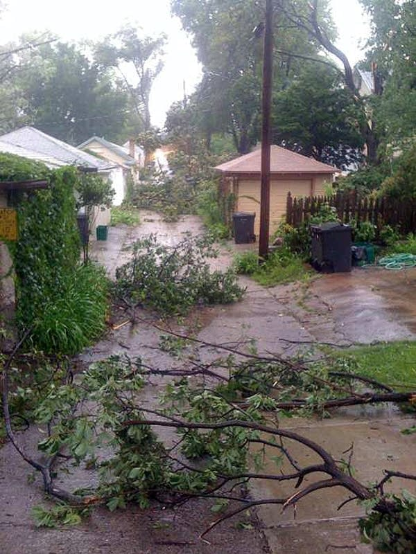 Trees down in Minneapolis