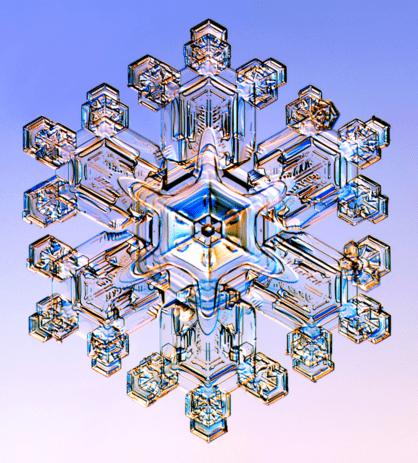 Snow crystal stellar dendrite