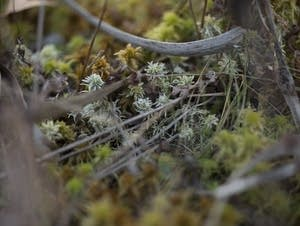 Sphagnum Moss, Merle's Bog in Rice County near Webster, Minnesota.