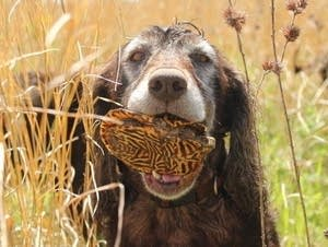 Dogs has been helping conservationists and researchers find rare turtles