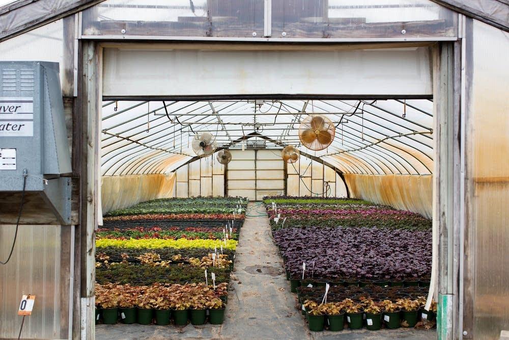 Neonicitinoid-free perennials