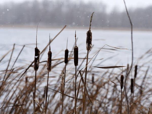 A brisk November wind stirred on the shore of Indian Jack Lake