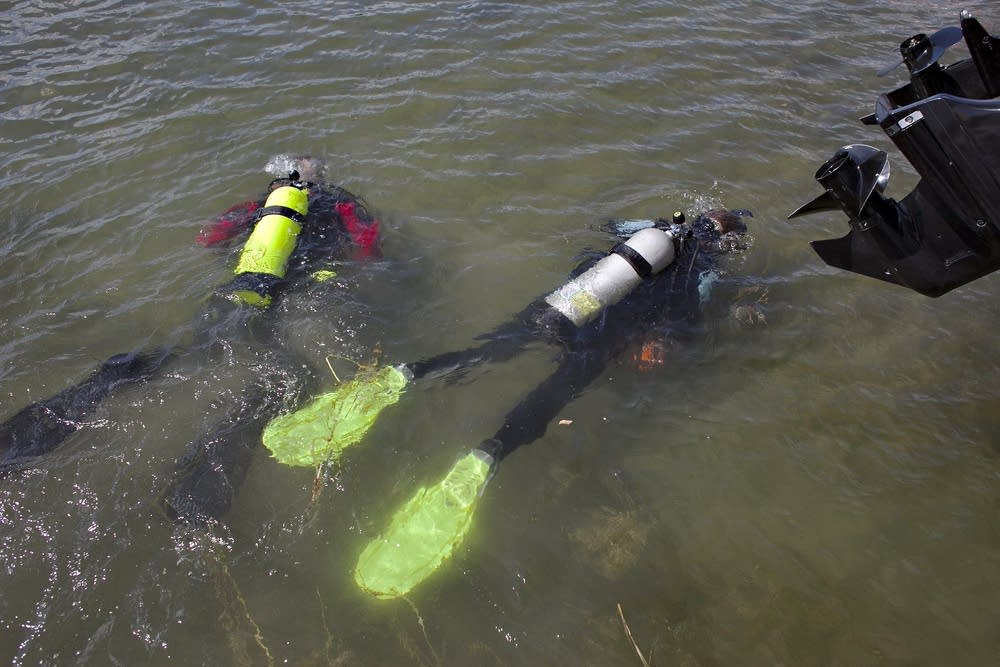 Divers search for zebra mussels in Rose Lake