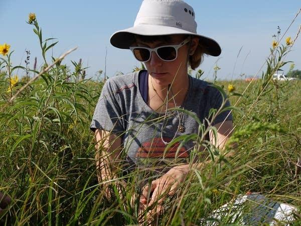 Genevieve Alexander plant identification