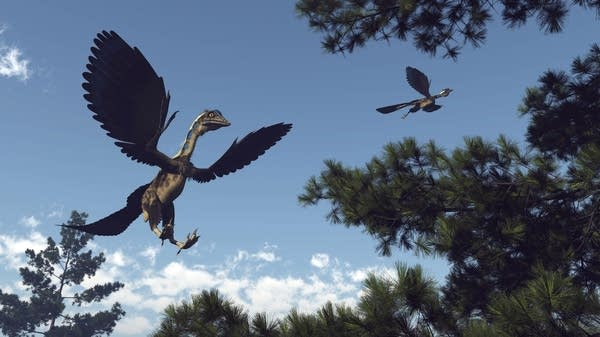 Rendering of a archaeopteryx, a winged dinosaur, flying through pine trees
