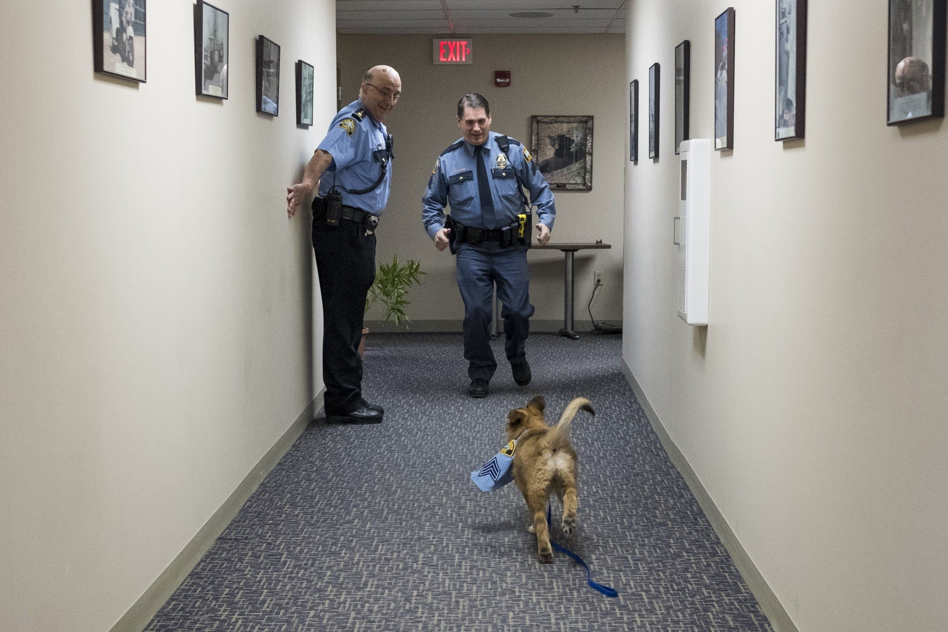 Sergeant Fuzz chases Sergeant Mike Ernster.