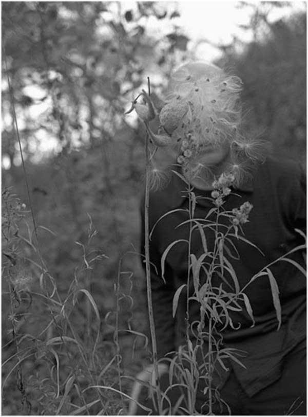 'Milkweed' 2004