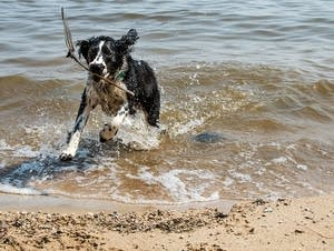 Spot plays in the water.