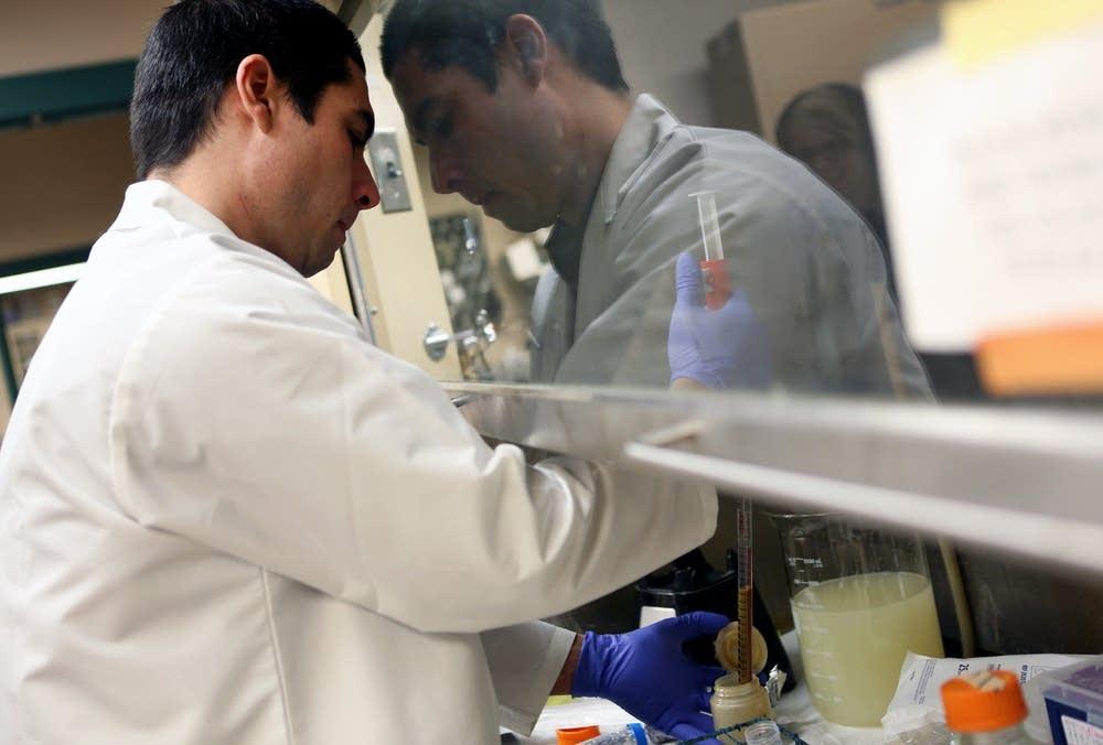 Preparing fecal bacteria