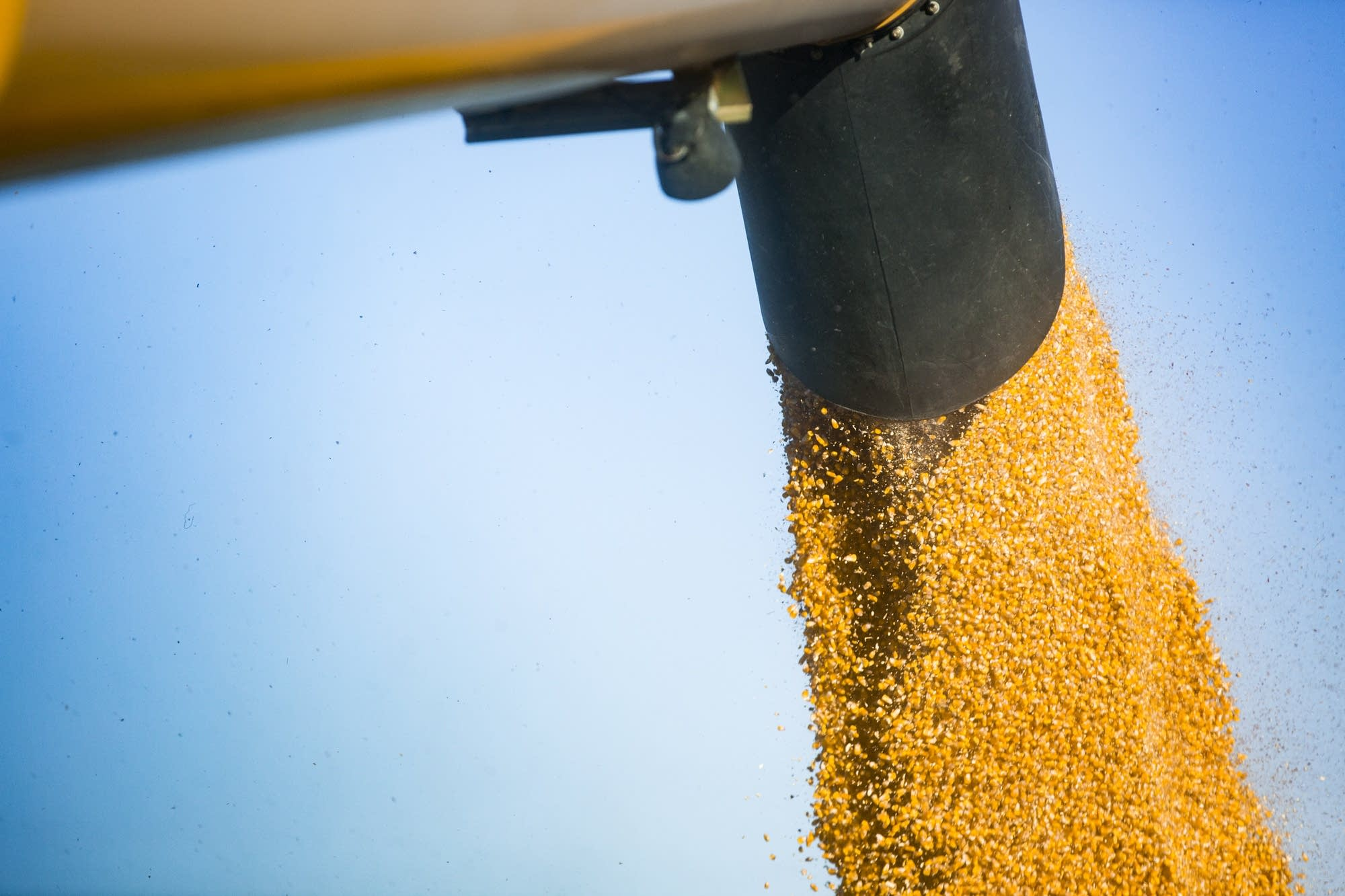 Thousands of pounds of corn flow from combine to tractor trailer.