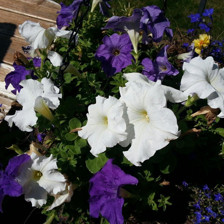 517 flowers
