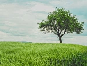 A lone tree stands in a tranquil meadow.