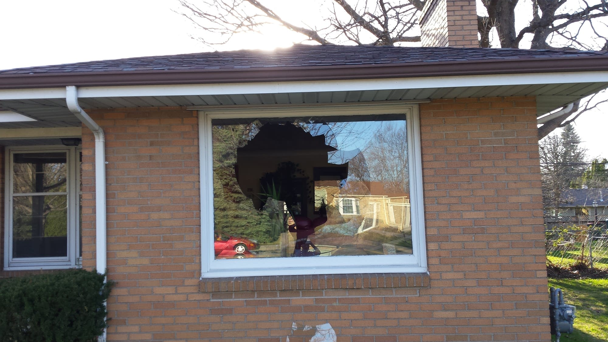 A turkey crashed through Liz Moran's window