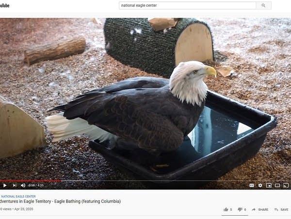 National Eagle Center video